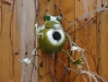 Winter finally comes to Ottawa: Frozen Frog Birdhouse