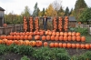 Now THAT\'s a pumpkin patch!